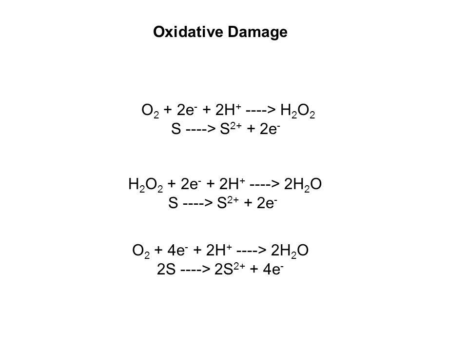 O 2 + 2e - + 2H + ----> H 2 O 2 S ----> S 2+ + 2e - O 2 + 4e - + 2H + ----> 2H 2 O 2S ----> 2S 2+ + 4e - H 2 O 2 + 2e - + 2H + ----> 2H 2 O S ----> S 2+ + 2e - Oxidative Damage