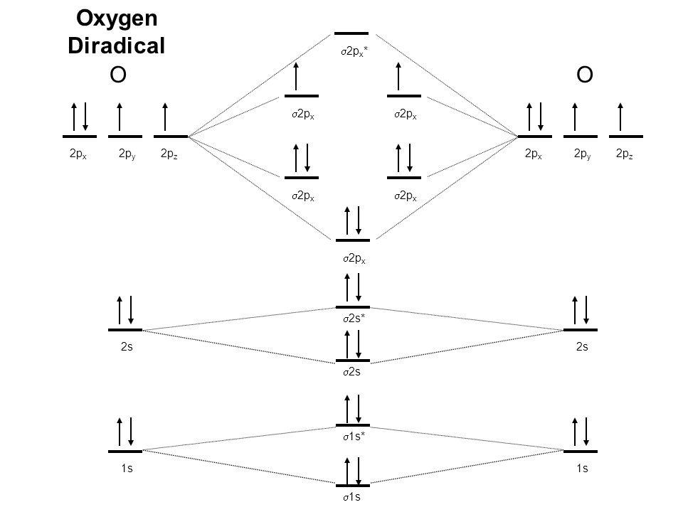 Oxygen Diradical OO 1s 2s 2p x 2p y 2p z 1s 2s 2p x 2p y 2p z  2s  2s*  1s  1s*  2p x  2p x *