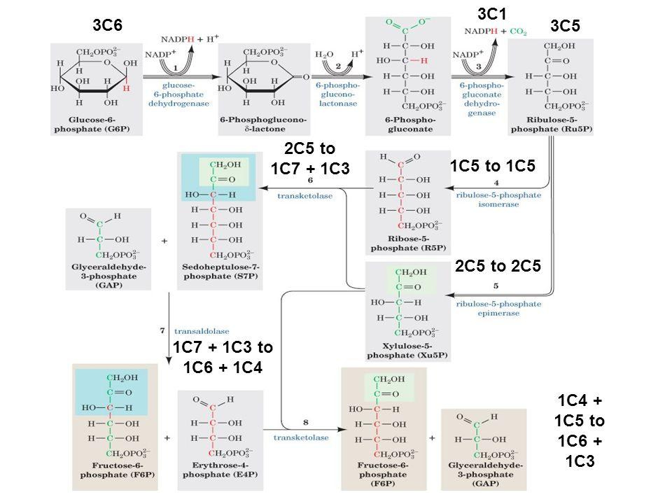 1C5 to 1C5 2C5 to 2C5 2C5 to 1C7 + 1C3 3C6 3C5 3C1 1C7 + 1C3 to 1C6 + 1C4 1C4 + 1C5 to 1C6 + 1C3