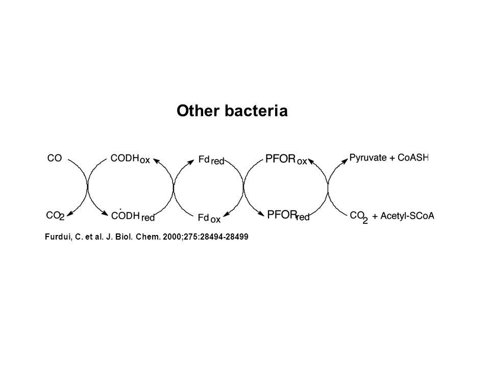 Furdui, C. et al. J. Biol. Chem. 2000;275:28494-28499 Other bacteria