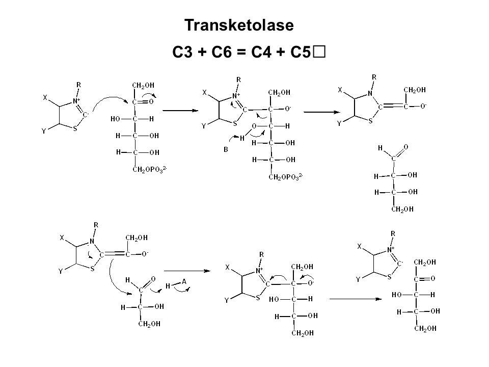 C3 + C6 = C4 + C5 Transketolase