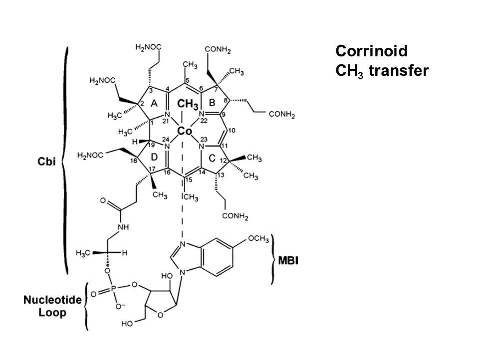 Corrinoid CH 3 transfer