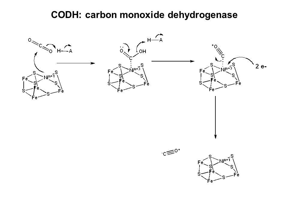 CODH: carbon monoxide dehydrogenase