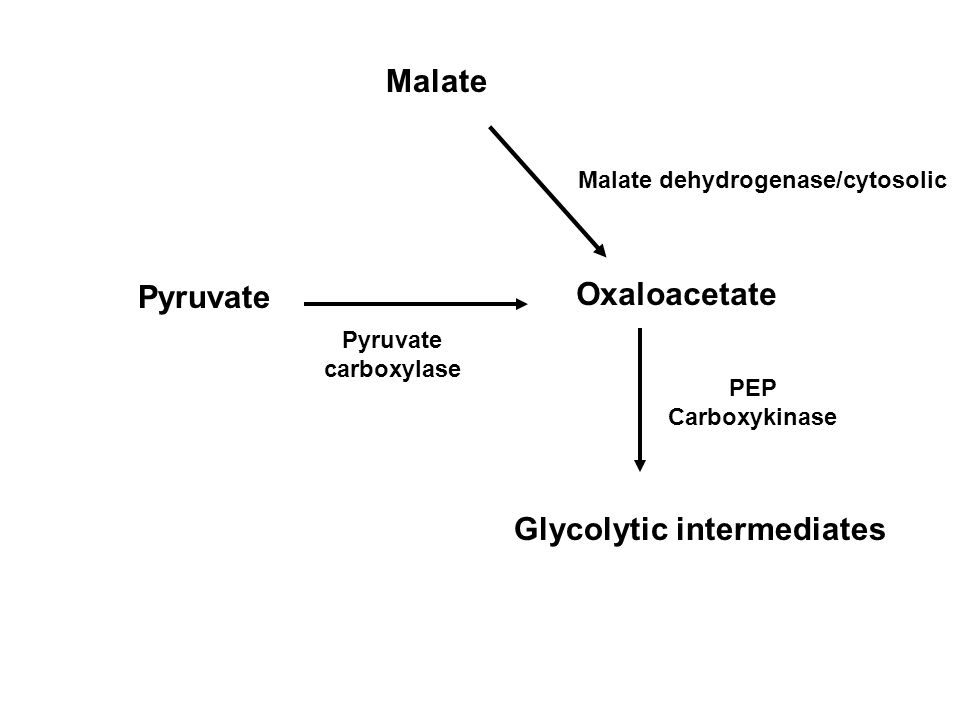 Malate Pyruvate Malate dehydrogenase/cytosolic Oxaloacetate Glycolytic intermediates Pyruvate carboxylase PEP Carboxykinase