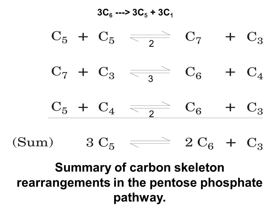 Summary of carbon skeleton rearrangements in the pentose phosphate pathway.