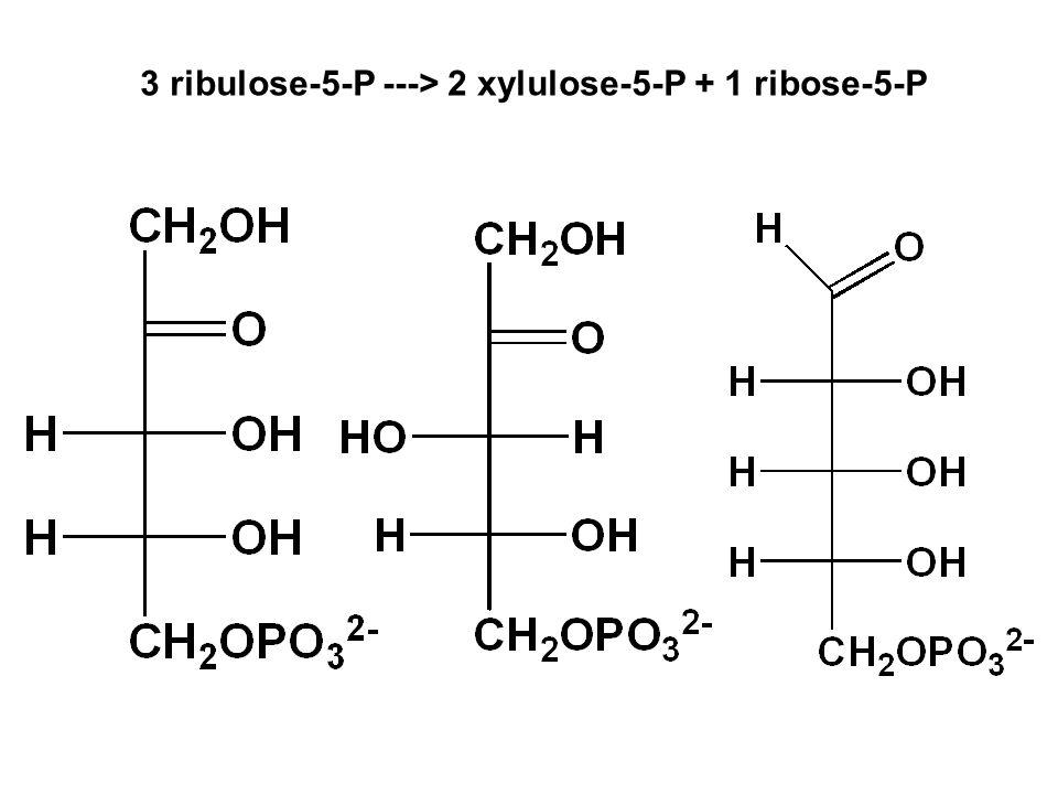 3 ribulose-5-P ---> 2 xylulose-5-P + 1 ribose-5-P