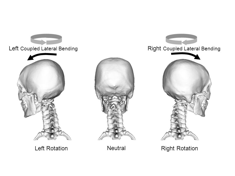 Figure 5 Neutral Left RotationRight Rotation Left Coupled Lateral Bending Right Coupled Lateral Bending