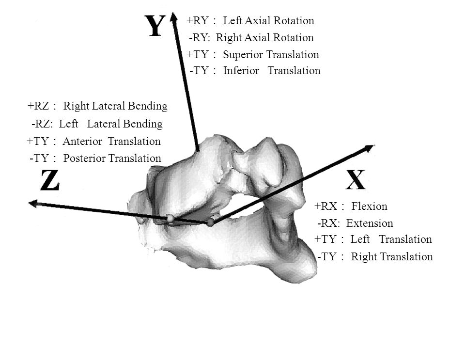 Figure 2 : Anatomical orthogonal coordinate system Z Y +RY : Left Axial Rotation -RY: Right Axial Rotation +RZ : Right Lateral Bending -RZ: Left Later