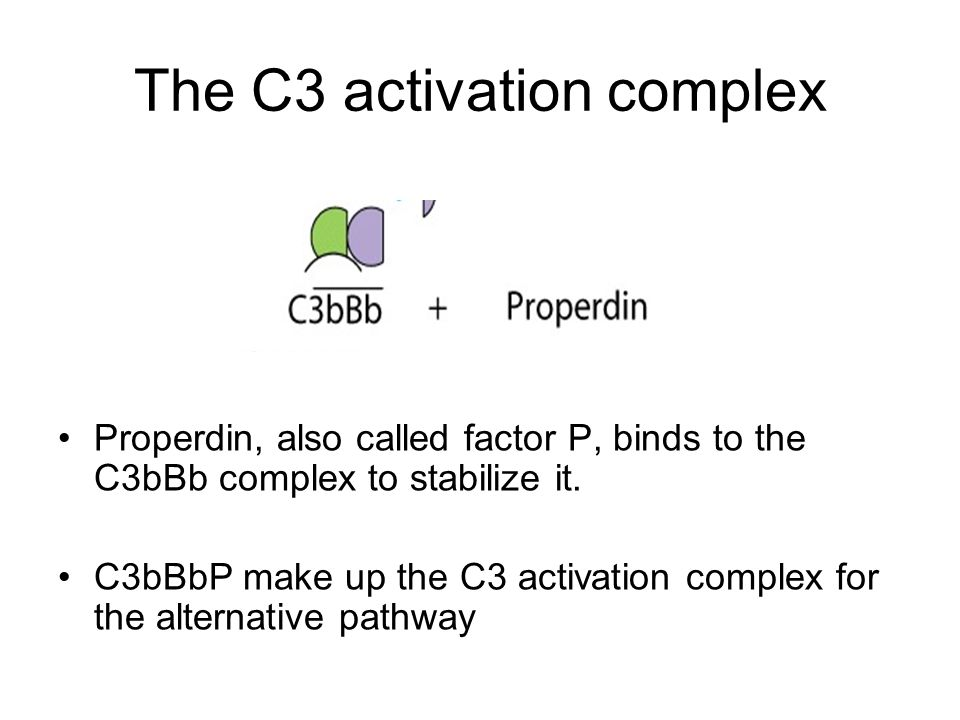 The C3 activation complex Properdin, also called factor P, binds to the C3bBb complex to stabilize it. C3bBbP make up the C3 activation complex for th