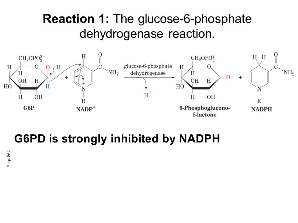 Reaction 1: The glucose-6-phosphate dehydrogenase reaction.