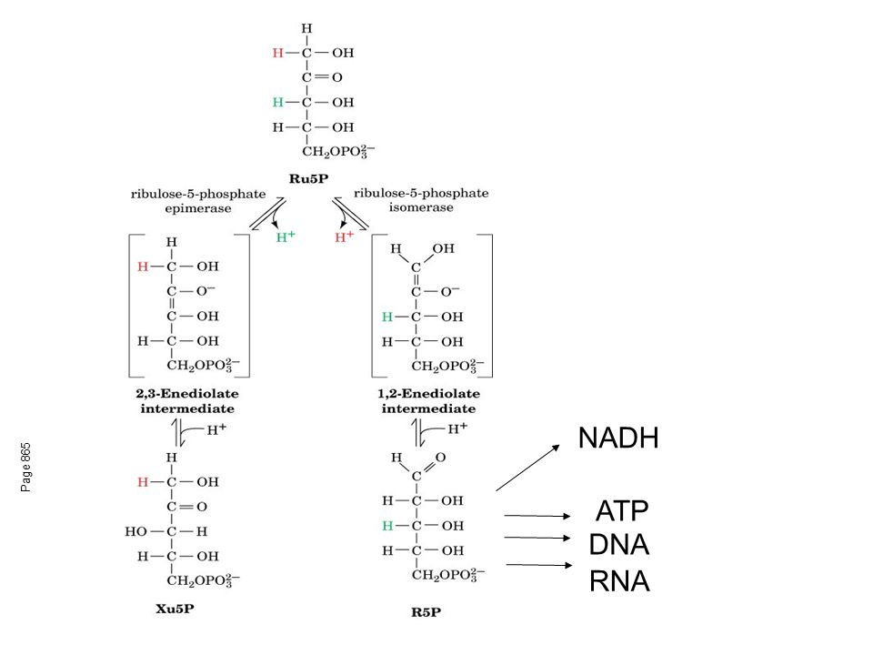 Page 865 NADH ATP DNA RNA