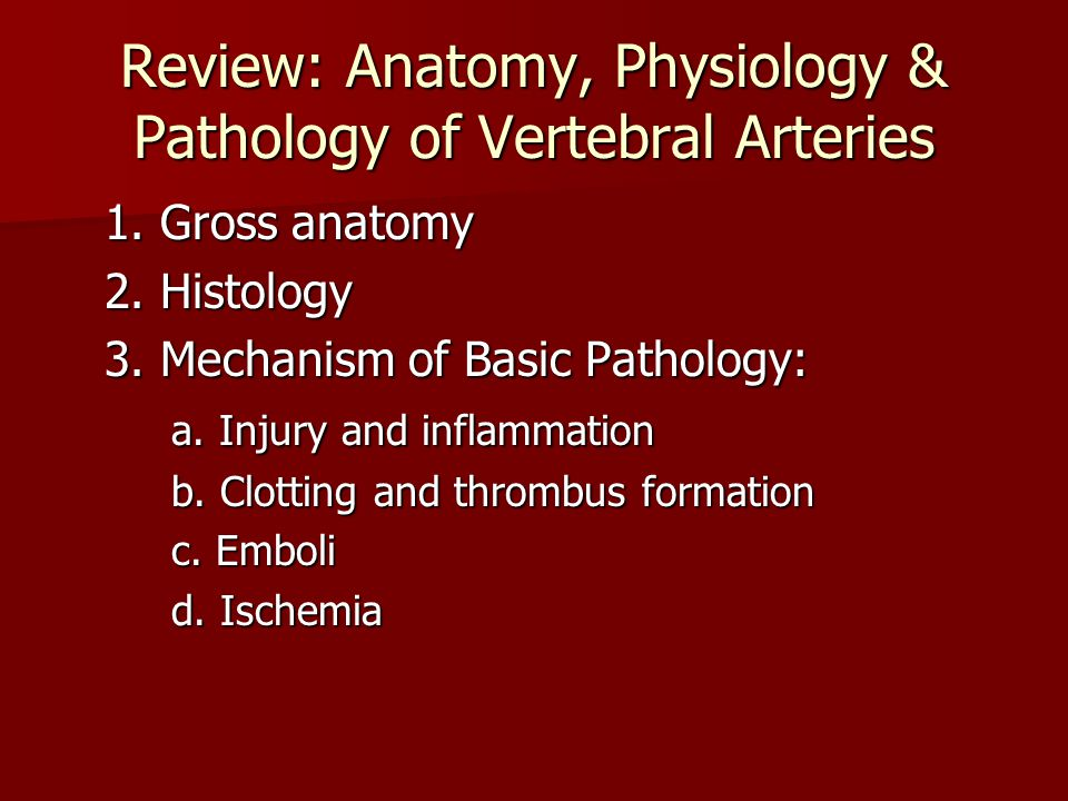 Review: Anatomy, Physiology & Pathology of Vertebral Arteries 1. Gross anatomy 2. Histology 3. Mechanism of Basic Pathology: a. Injury and inflammatio