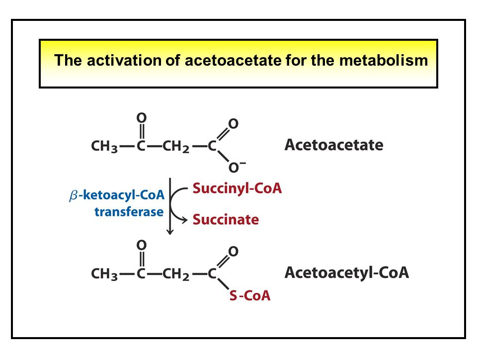The activation of acetoacetate for the metabolism