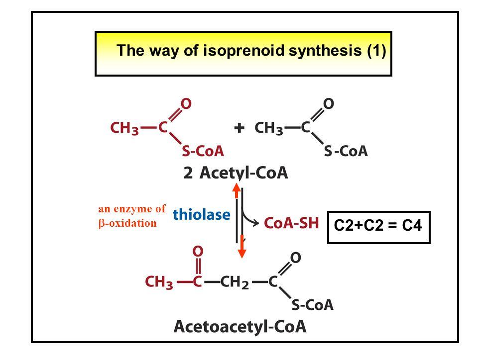 The way of isoprenoid synthesis (2) C4+C2 = C6
