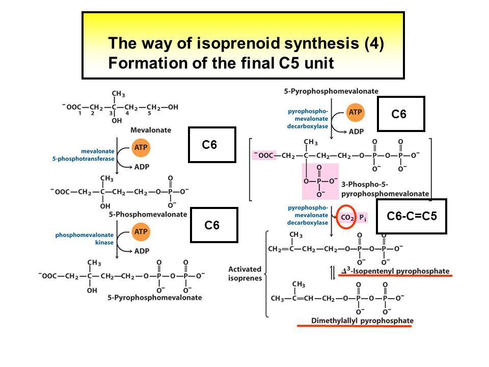 The action of C15 prenyltransferase (3 X 5) C5 C15 C10