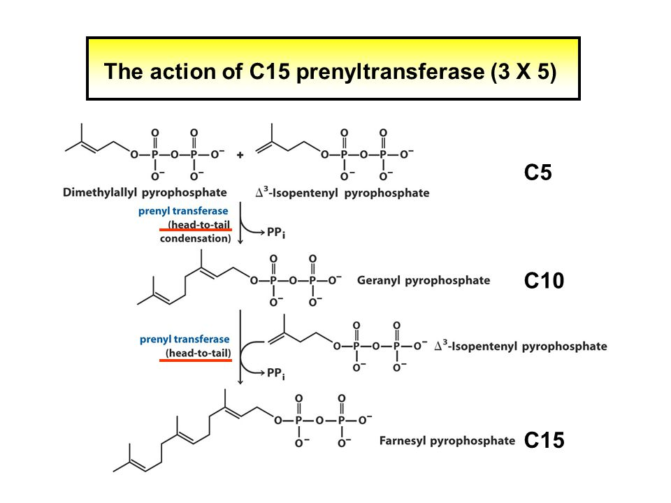 The action of C15 prenyltransferase (3 X 5) C5 C15 C10
