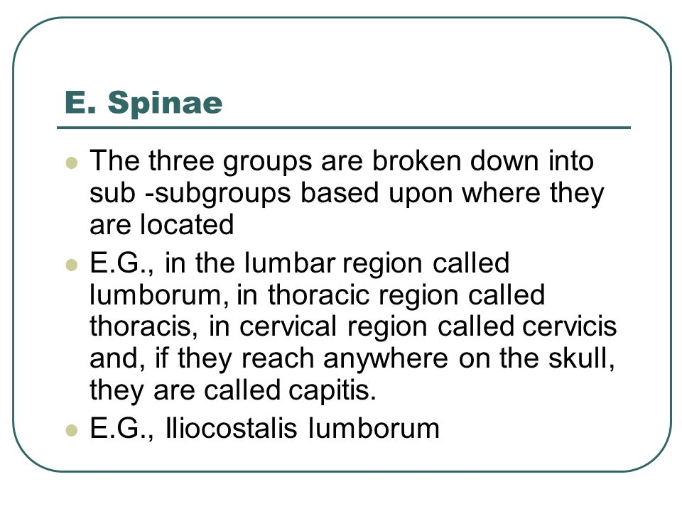 The three groups are broken down into sub -subgroups based upon where they are located E.G., in the lumbar region called lumborum, in thoracic region