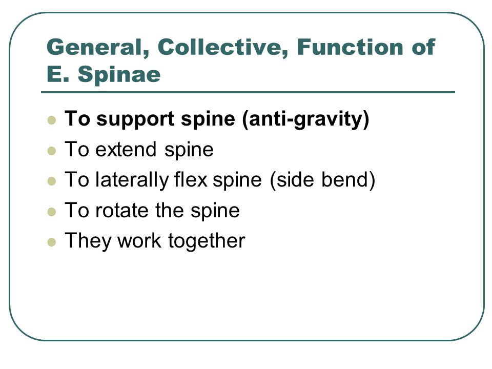 General, Collective, Function of E. Spinae To support spine (anti-gravity) To extend spine To laterally flex spine (side bend) To rotate the spine The