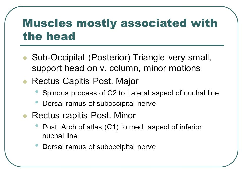 Muscles mostly associated with the head Sub-Occipital (Posterior) Triangle very small, support head on v. column, minor motions Rectus Capitis Post. M