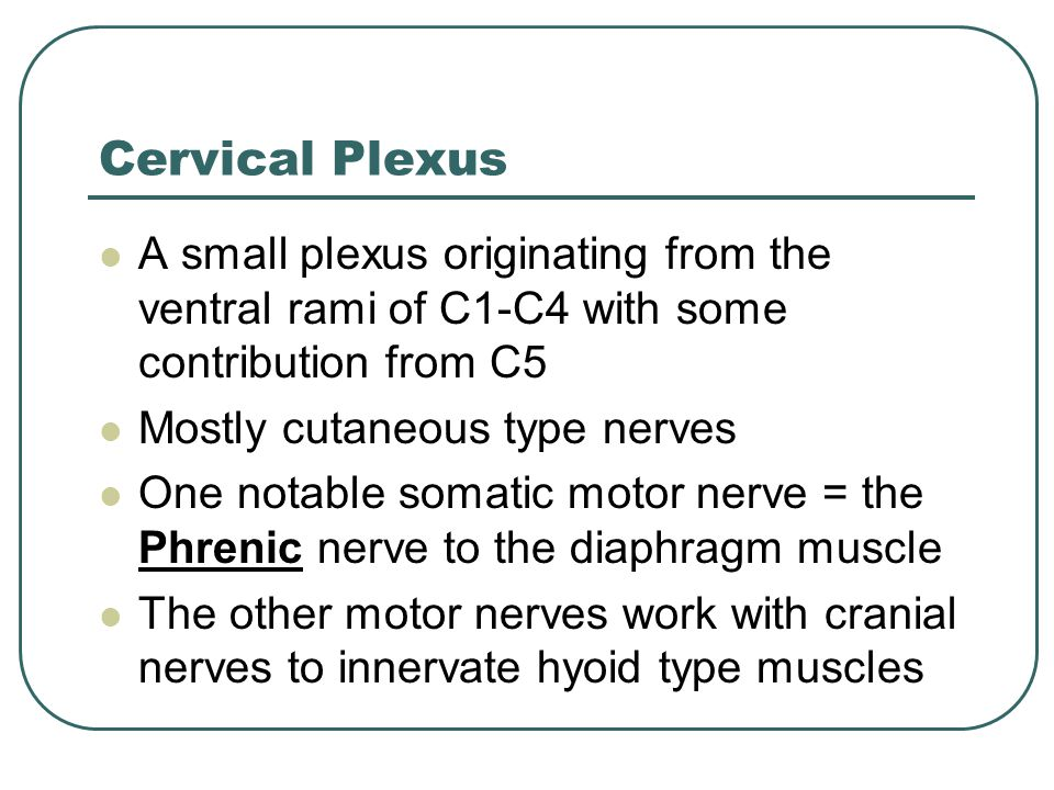 Cervical Plexus A small plexus originating from the ventral rami of C1-C4 with some contribution from C5 Mostly cutaneous type nerves One notable soma