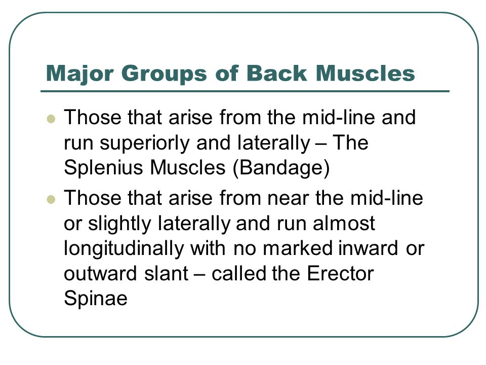 Major Groups The third group are those that arise laterally and run towards the mid-line as they travel up Called the Transversospinalis group Last – small muscles that run from one spinous process to another or one transverse process to another (interspinales and intertransvesus)