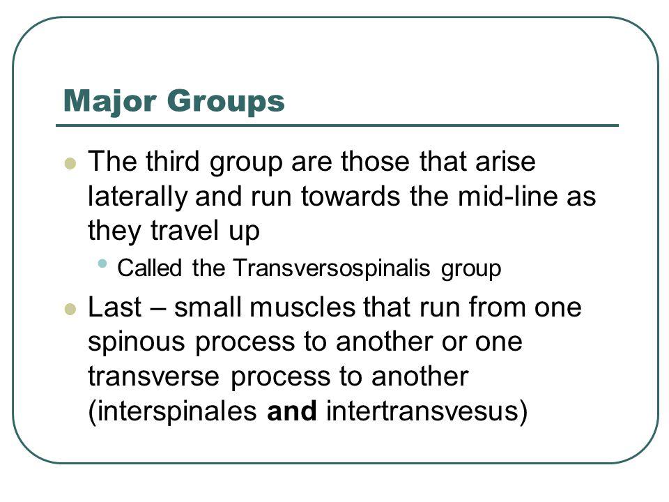 Splenius Muscles Splenius Capitis Lig.Nuchae and Spinous Process of C7-T4 to sup.
