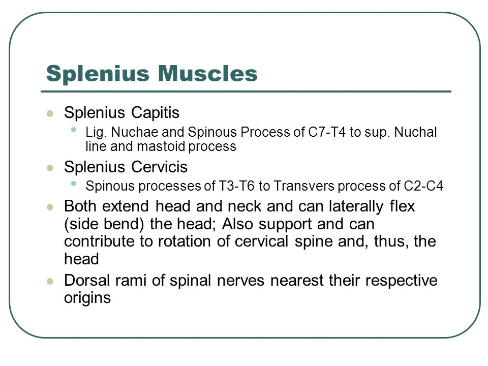 Splenius Muscles Splenius Capitis Lig. Nuchae and Spinous Process of C7-T4 to sup. Nuchal line and mastoid process Splenius Cervicis Spinous processes