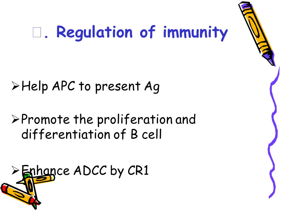 Ⅴ. Regulation of immunity  Help APC to present Ag  Promote the proliferation and differentiation of B cell  Enhance ADCC by CR1