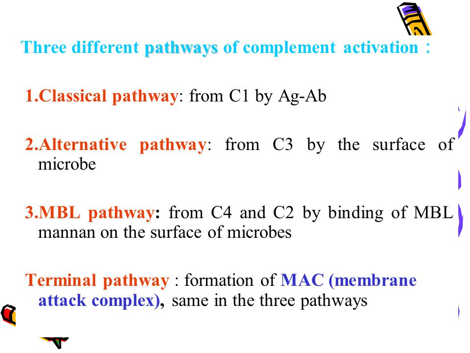 pathways Three different pathways of complement activation : 1.Classical pathway: from C1 by Ag-Ab 2.Alternative pathway: from C3 by the surface of mi
