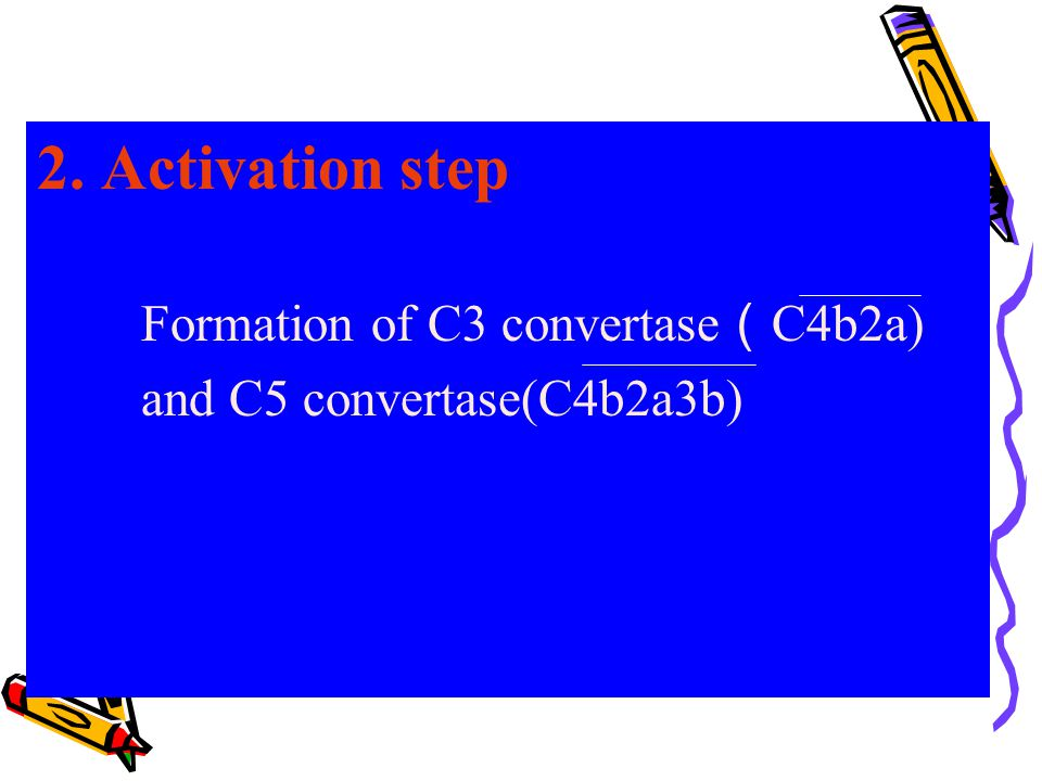 2. Activation step Formation of C3 convertase ( C4b2a) and C5 convertase(C4b2a3b)