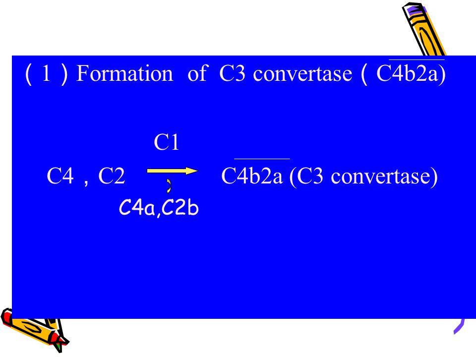 ( 1 ) Formation of C3 convertase ( C4b2a) C1 C4 , C2 C4b2a (C3 convertase) C4a,C2b