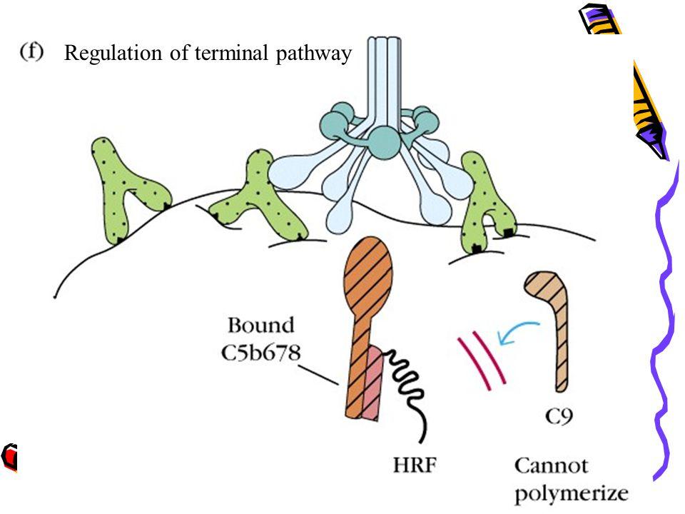 Regulation of terminal pathway