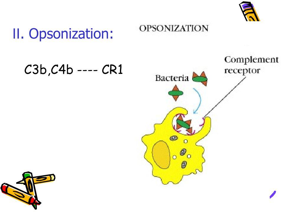 C3b,C4b ---- CR1 Ⅱ. Opsonization: