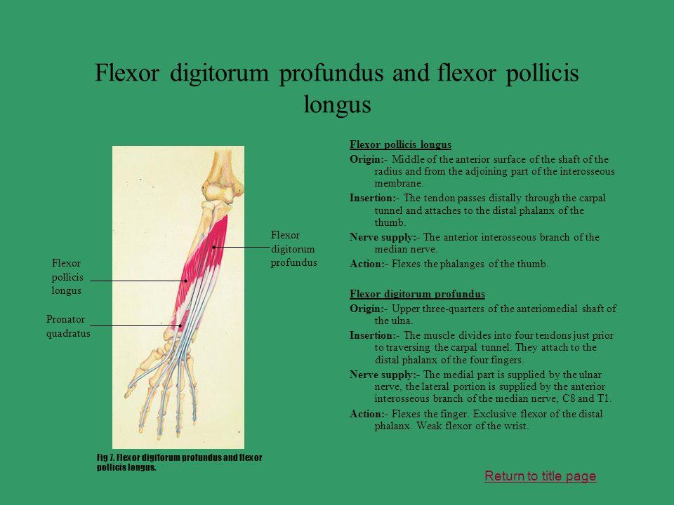 Flexor digitorum profundus and flexor pollicis longus Flexor pollicis longus Origin:- Middle of the anterior surface of the shaft of the radius and fr