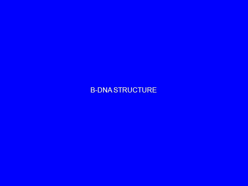 B-DNA STRUCTURE