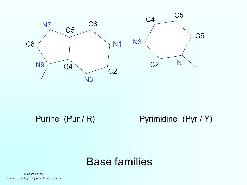 Base families Purine (Pur / R)Pyrimidine (Pyr / Y) C2 N1 C5 C6 N7 C4 C8 N9 N3 N1 C4 N3 C2 C5 C6 Richard Lavery Institut de Biologie Physico-Chimique, Paris
