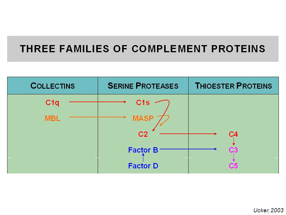 Three families of Complement proteins Ucker, 2003