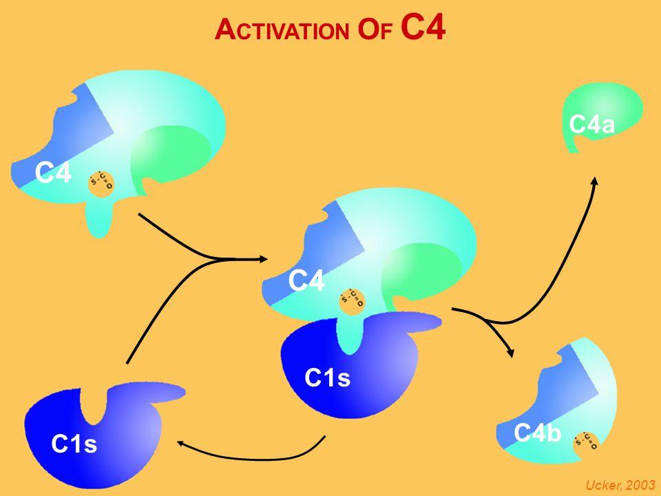 Activation of C4 A CTIVATION O F C4 C4b C4 C1s Ucker, 2003 C4a C4 C1s