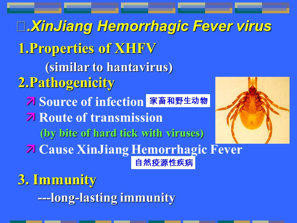 2.Pathogenicity   Source of infection   Route of transmission   Cause XinJiang Hemorrhagic Fever 自然疫源性疾病 (by bite of hard tick with viruses) 1.Properties of XHFV (similar to hantavirus) 家畜和野生动物 Ⅱ.XinJiang Hemorrhagic Fever virus 3.Immunity 3.
