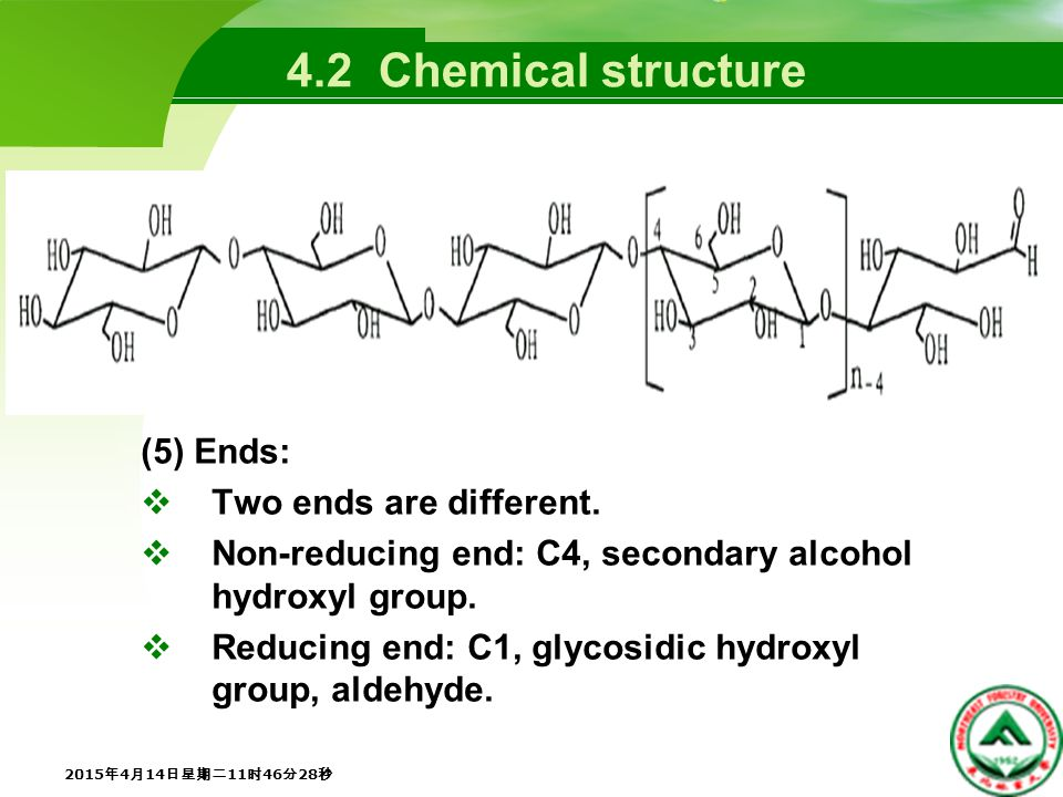 4.2 Chemical structure (6) Middle units:  Except the reducing end, all other units exist in the cycle form.