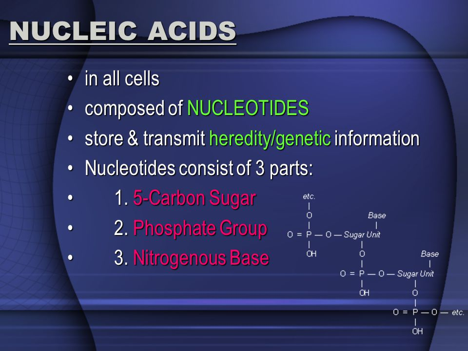 NUCLEIC ACIDS in all cellsin all cells composed of NUCLEOTIDEScomposed of NUCLEOTIDES store & transmit heredity/genetic informationstore & transmit he