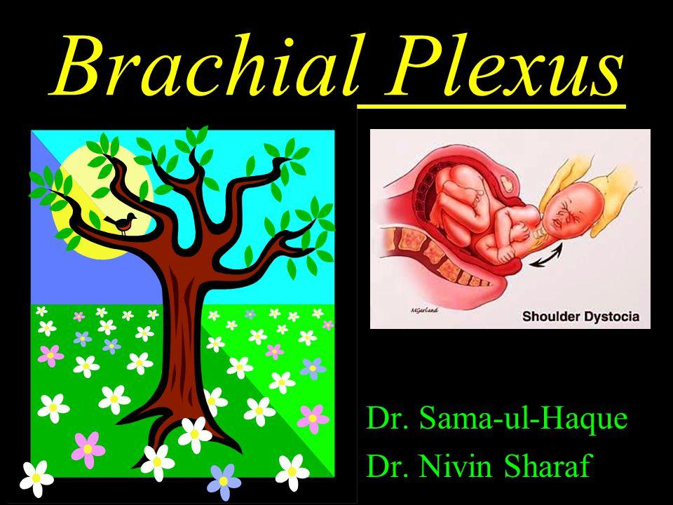 Brachial Plexus Dr. Sama-ul-Haque Dr. Nivin Sharaf