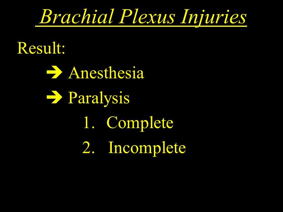 Brachial Plexus Injuries Result:  Anesthesia  Paralysis 1. Complete 2. Incomplete