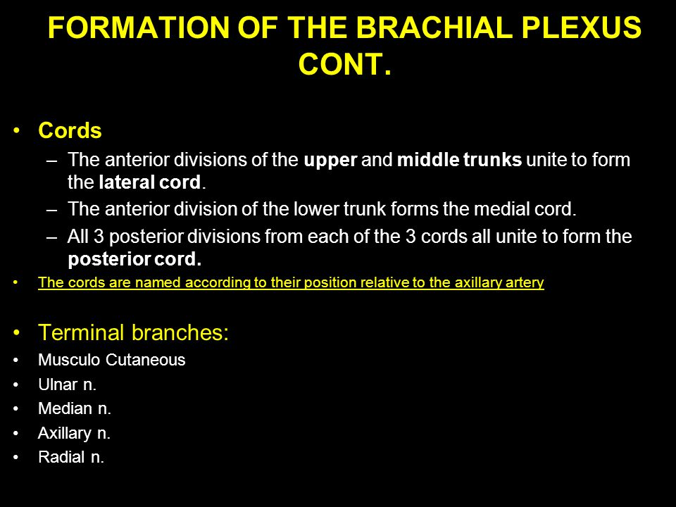 FORMATION OF THE BRACHIAL PLEXUS CONT. Cords –The anterior divisions of the upper and middle trunks unite to form the lateral cord. –The anterior divi