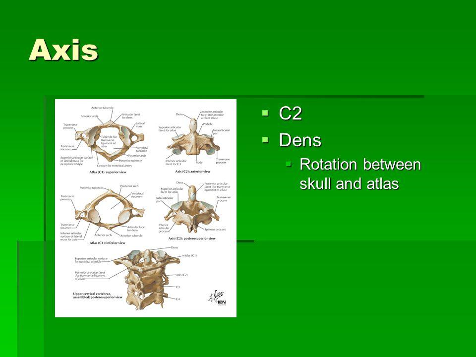 Axis  C2  Dens  Rotation between skull and atlas