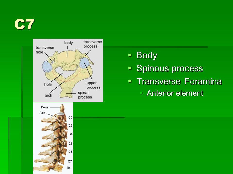 C7  Body  Spinous process  Transverse Foramina  Anterior element