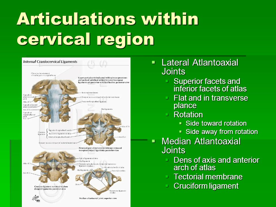 Articulations within cervical region  Lateral Atlantoaxial Joints  Superior facets and inferior facets of atlas  Flat and in transverse plance  Ro