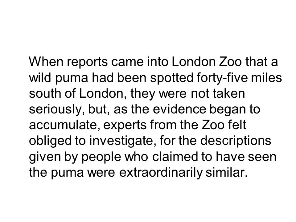 When reports came into London Zoo that a wild puma had been spotted forty-five miles south of London, they were not taken seriously, but, as the evidence began to accumulate, experts from the Zoo felt obliged to investigate, for the descriptions given by people who claimed to have seen the puma were extraordinarily similar.