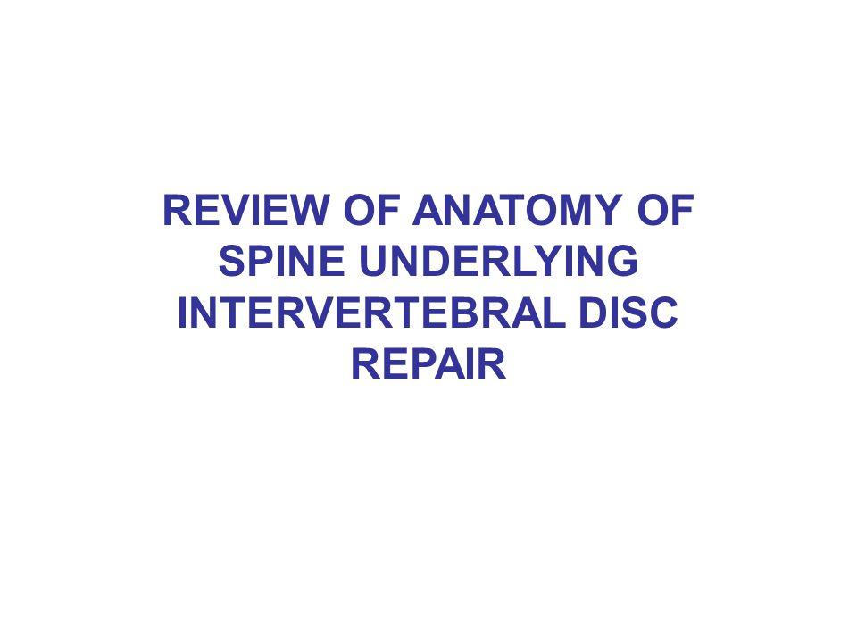 REVIEW OF ANATOMY OF SPINE UNDERLYING INTERVERTEBRAL DISC REPAIR