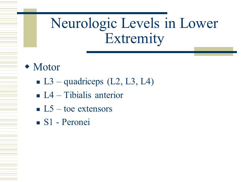 Neurologic Levels in Lower Extremity  Motor L3 – quadriceps (L2, L3, L4) L4 – Tibialis anterior L5 – toe extensors S1 - Peronei